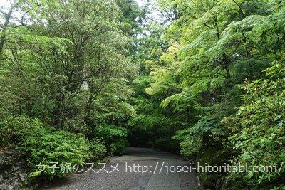 霧島神宮の参道