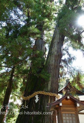 大神神社の御神木