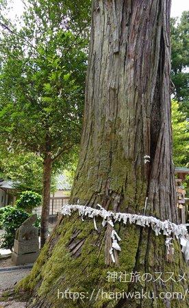 須我神社の御神木