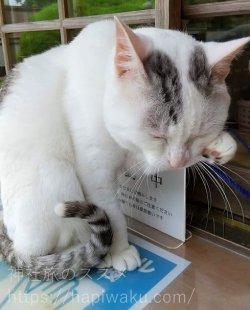 木山神社の招き猫
