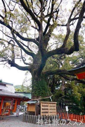 熊野那智大社の御神木